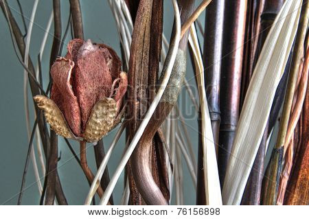 Dried tulip 80