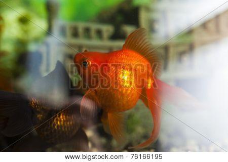 Fishes In An Aquarium