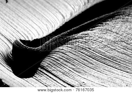 Abstract Black And White Clay Surface