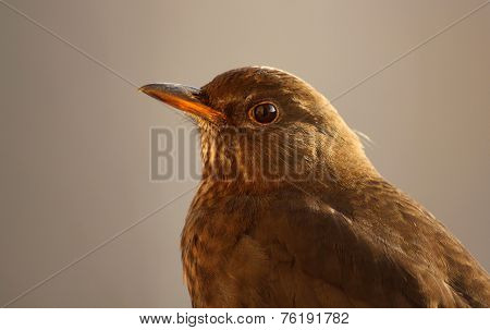 Close up of small bird