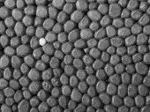 stock photo of thermoplastics  - Full frame closeup of a grey Polystyrene surface - JPG