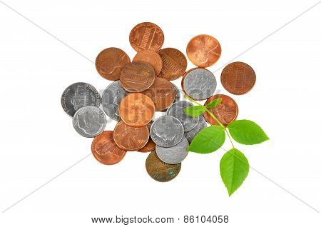 Coin and green leaf