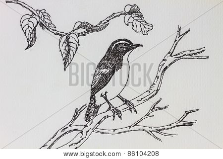 bird drawing