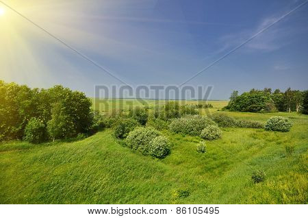 Green Grass Field Landscape
