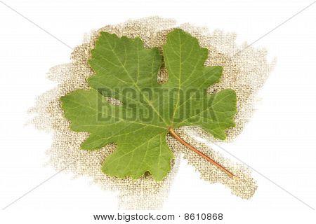 Grape Leaf On A Background Burlap