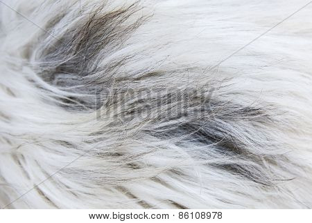Long fur sheepskin