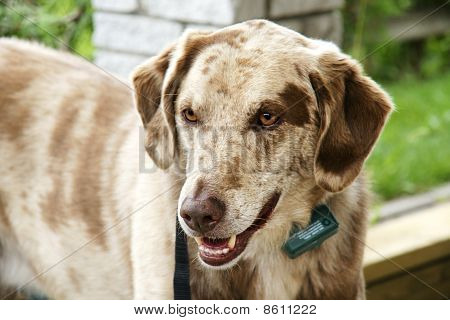 Dog With Collar