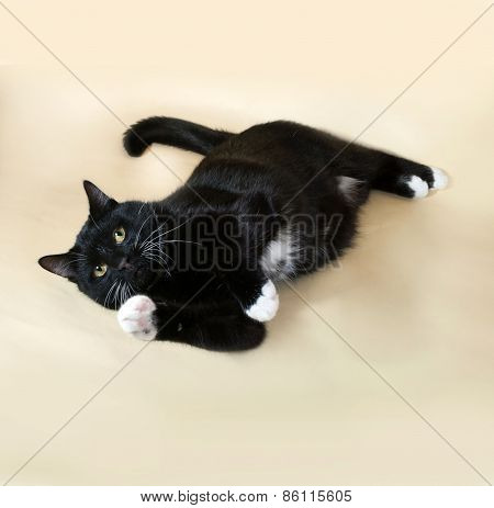 Black Cat With White Spots Sitting On Yellow