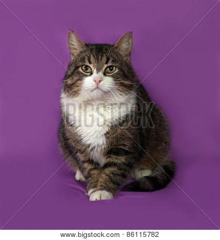 Tabby And White Cat Sitting On Lilac