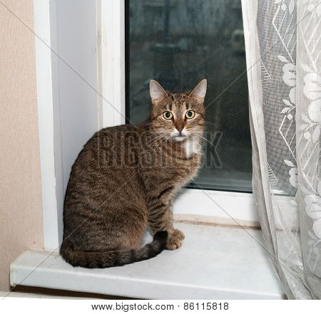 Striped Cat Sitting On Windowsill