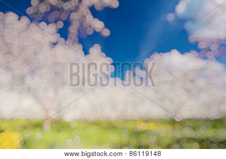 Blooming apple orchard in spring and blue sky. Retro filtered. Beauty world. Natural blurred background. Soft light effect.
