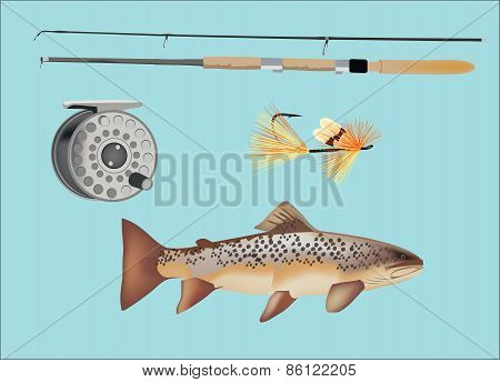 Fish salmon trout