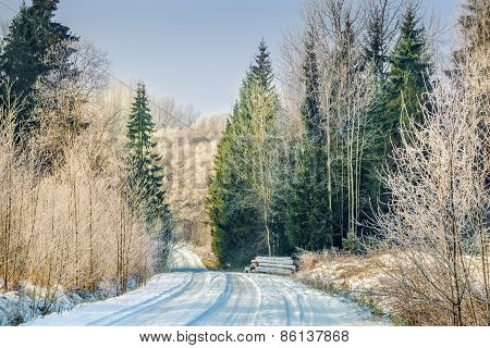 Road with snow through the woods in winter