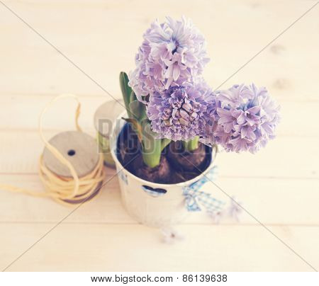 hyacinth growing in a pot on a wooden background