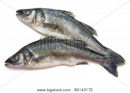 Sea Bass Fish On Withe Background