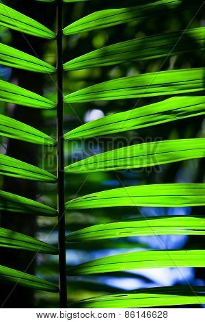 Green backlit leaf in the jungle