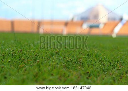 Grass In The Stadium.