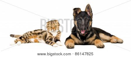 Puppy and cat lying together