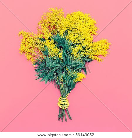 Yellow Mimosa Bouquet On Pink Background, The Symbol Of International Women's Day.