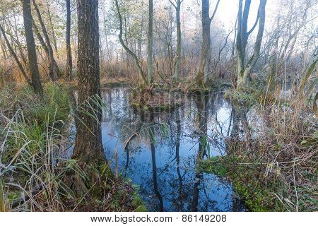 Beautiful Wild Swamps Sunrise Landscape.