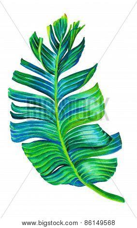 Seingle Isolated Banana Leaf