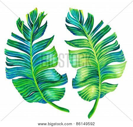 Seingle Isolated Banana Leaf