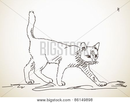 Sketch of cat, Hand drawn illustration Vector, Isolated