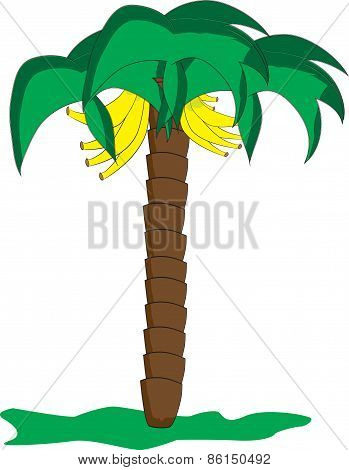 Palm banana illustration