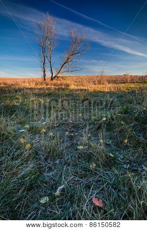 Autumn Withered Grassland With Fallen Leaves.