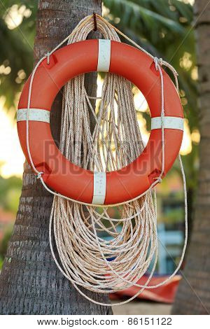 Life Buoy On Palm Tree