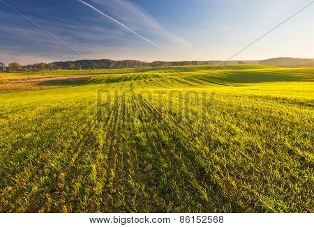 Green Young Field Landscape