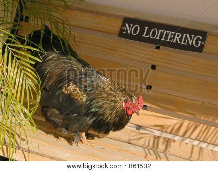 chicken  sign 1