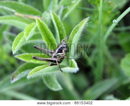 Grasshopper Sitting In The Grass On A Sheet