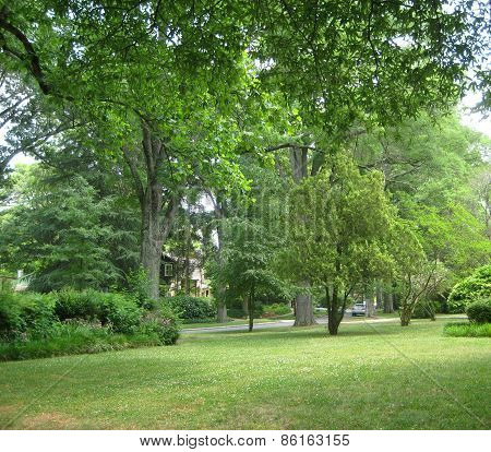 Spring green in a southeast neighborhood park