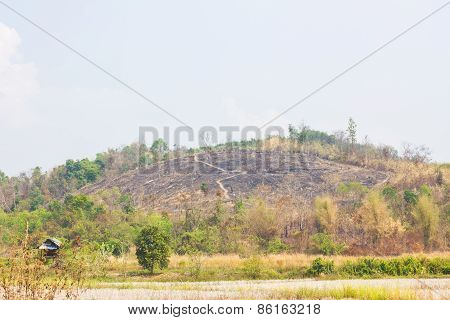 Hill Without Trees Because Of Fire