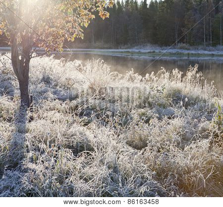 Chilly morning, rime and frost in the grass.