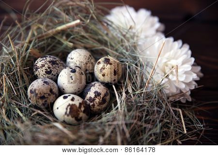 Easter quail eggs in the nest on rustic wooden background. Selective soft focus