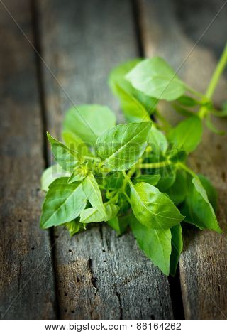 Fresh basil on the wooden table