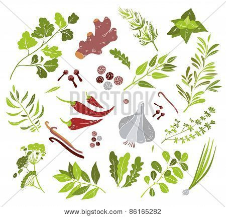 Vector different herbs and spices