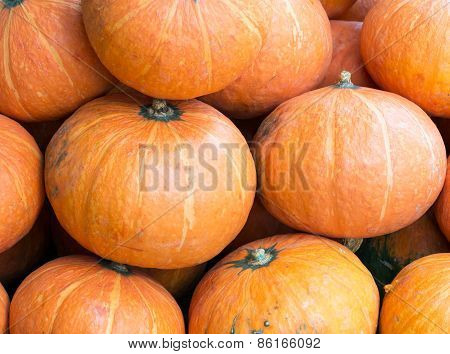 Fresh Large Pumpkin