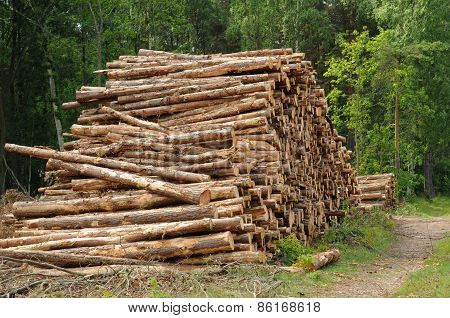 Lumber Stacked In A Forest