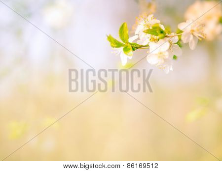 Blossoming Tree Branch Background