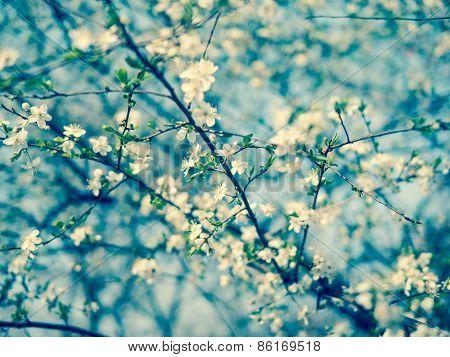 Blue Tones Blossoming Tree