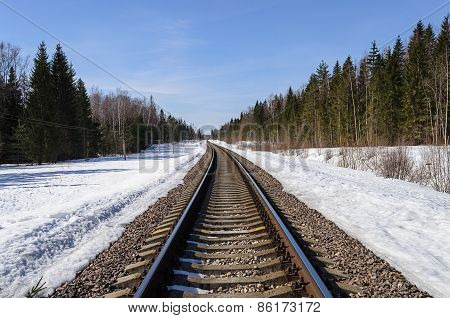 Railway Track In Spring Forest