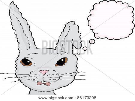 Isolated Shocked Roabbit