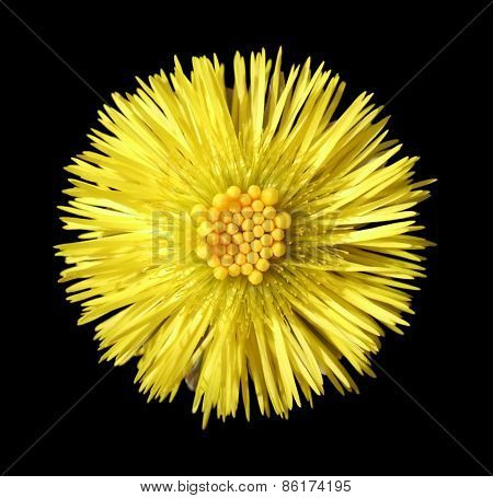 Yellow Flower Head