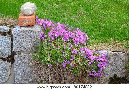 Stone Fencing Overgrown With Flowers