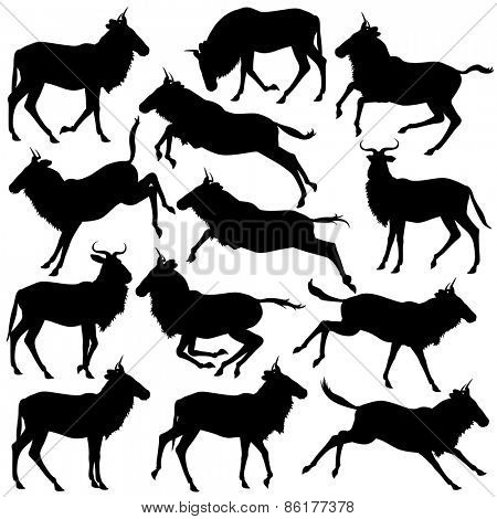 Set of eps8 editable vector silhouettes of adult wildebeest standing, walking, running and jumping