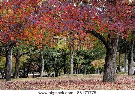 Fall In Japan