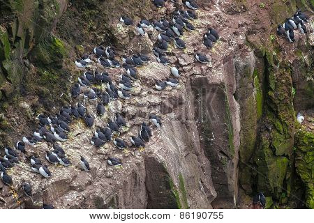 Colony of cormorants sitting on the nests
